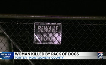 'My mom deserves justice.' Pack of dogs kills woman walking on street, Texas cops say